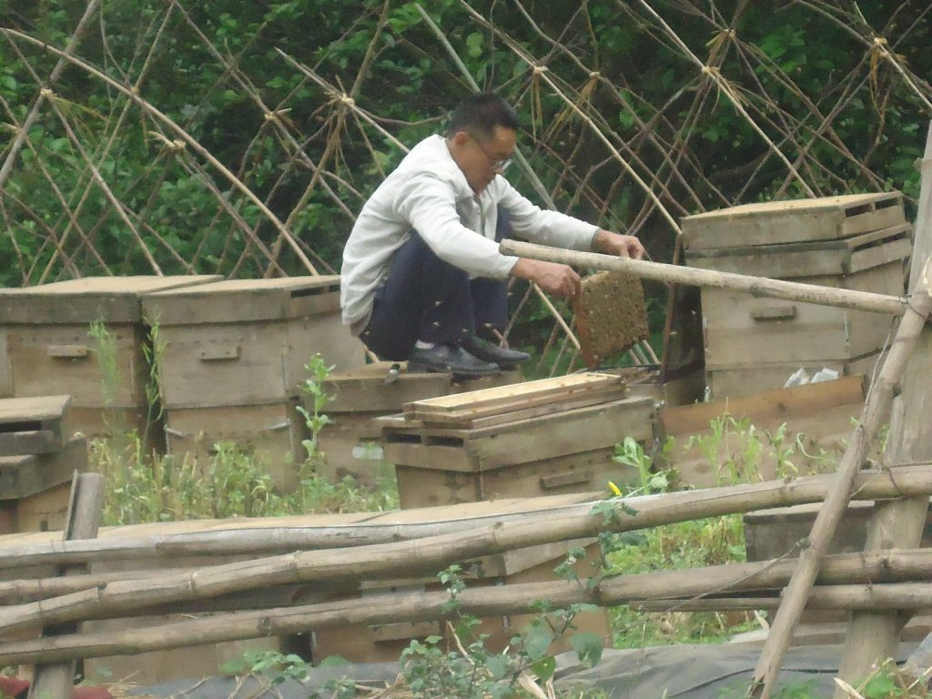 A bee keeper on the road to Yangshuo.